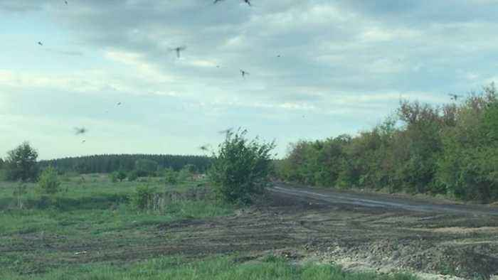 News video: Western Russia Town Plagued by Mosquitoes