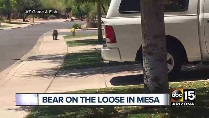 News video: Top stories: Search for homicide suspect in Youngtown; First female CIA director named; Bear spotted in Mesa; AZ national guard