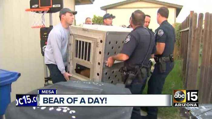 News video: Mesa neighborhood reacts to bear sighting
