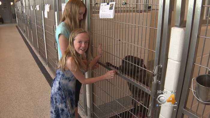 News video: Girls Turn Store Closing Into Animal Shelter Donation Event