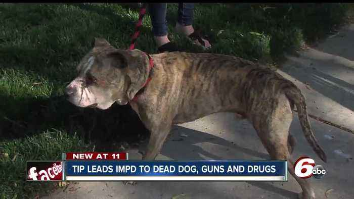 IMPD finds burned dog, guns and drugs at home linked to shot pit bull