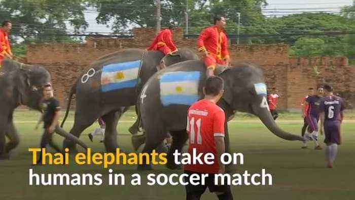 Thai elephants play soccer to stamp out illegal gambling