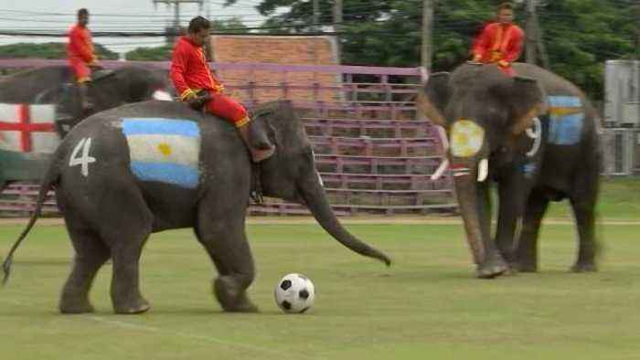 News video: Soccer elephants beat humans 2-1 as Thailand looks to stamp out illegal gambling
