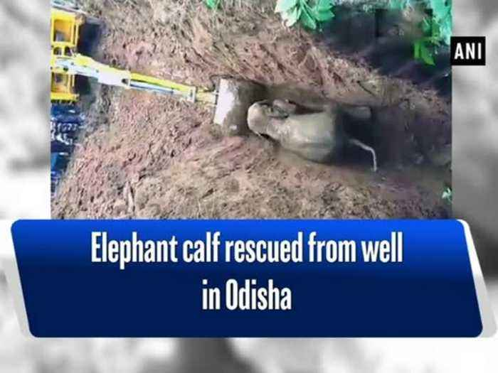 Elephant calf rescued from well in Odisha