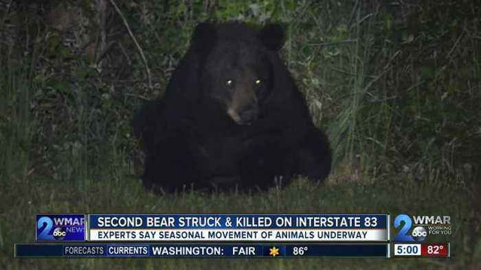 News video: Second bear struck and killed on I-83