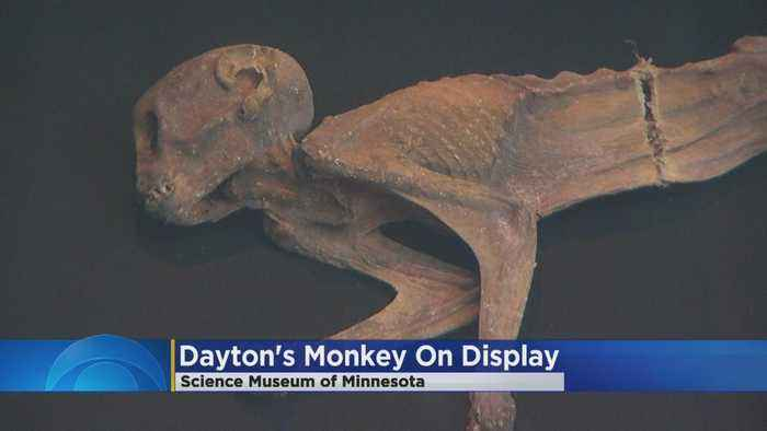 News video: Mummified 'Dayton's Monkey' On Display At Science Museum