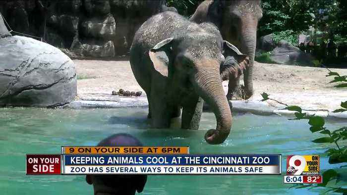 News video: How animals stay cool at the Cincinnati Zoo