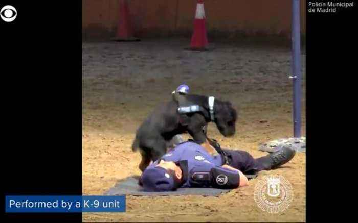 how to become a police dog handler nz