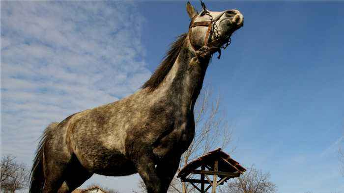 News video: New Research Shows Horses Express Emotion Through Sound