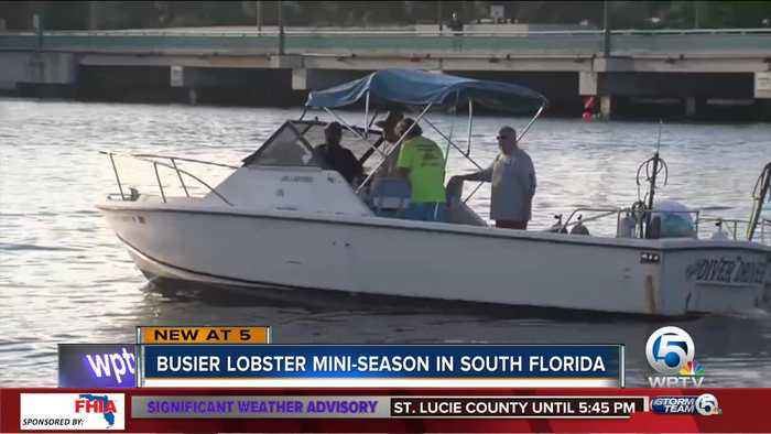 News video: Dive shops expect busier lobster mini season in South Florida
