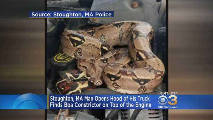 'Didn't Notice It At First': Man Finds Boa Constrictor On Engine