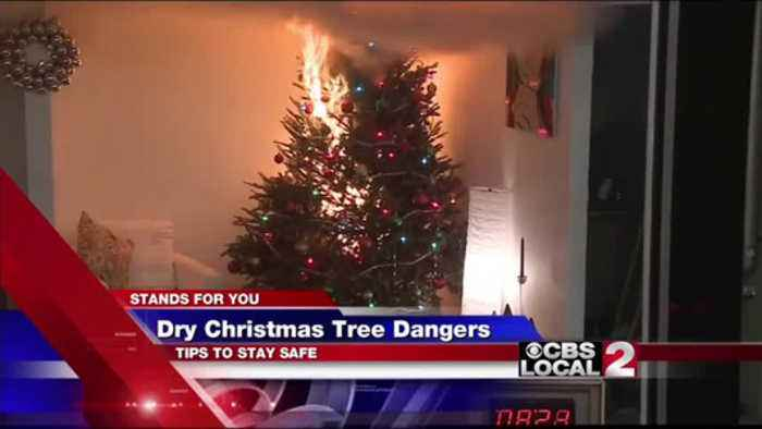 Dry Christmas Trees A Fire Hazard One News Page Us Video