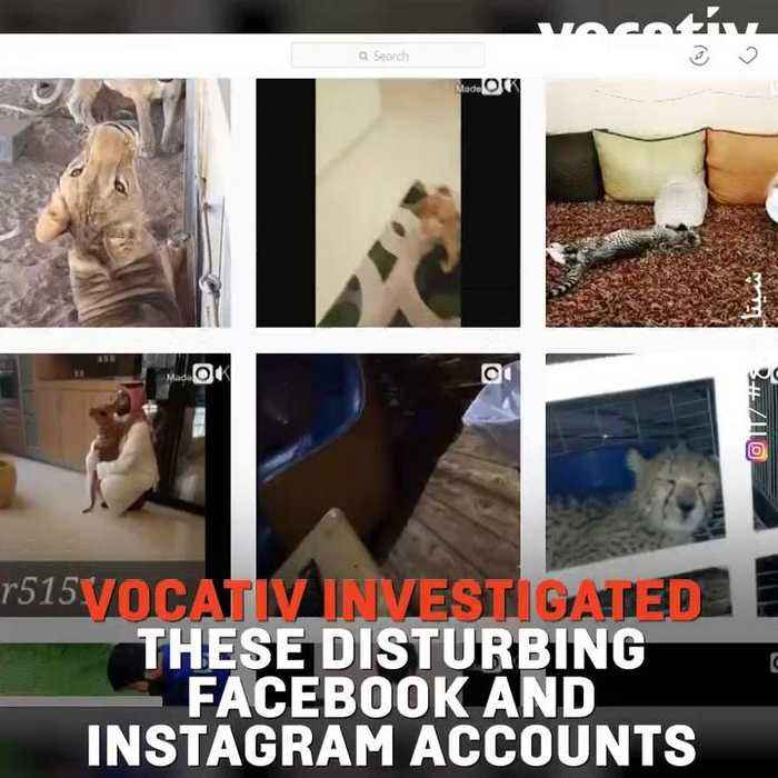 The Illegal Wild Animal Black Market In The Arab World Goes Social With  Exotic Animals Sold On FB and IG