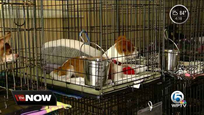 News video: Local group taking in animals from areas impacted by Florence