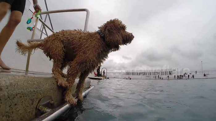 Dogs have their day at closing of famed English saltwater Pool