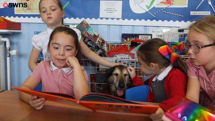 Pooch Helps Primary School Children Learn to Read