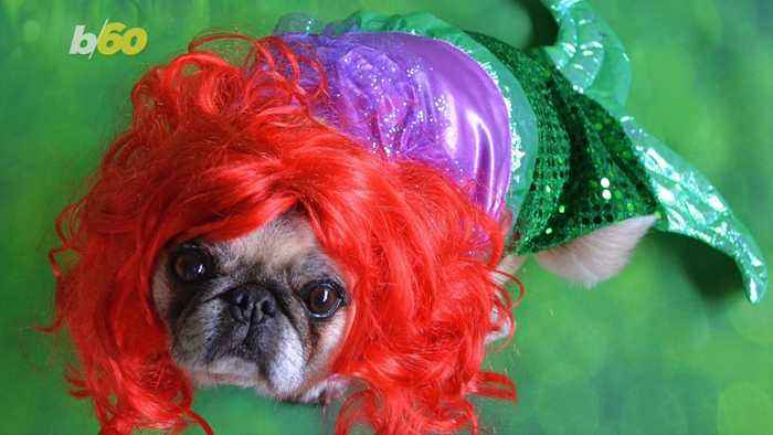 The Scary Amount People Will Spend Dressing up Their Pets This Halloween