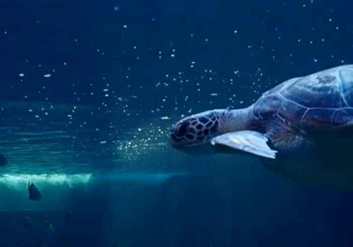 'Shocking to See': Turtle Swallows Plastic Bags and Balloons