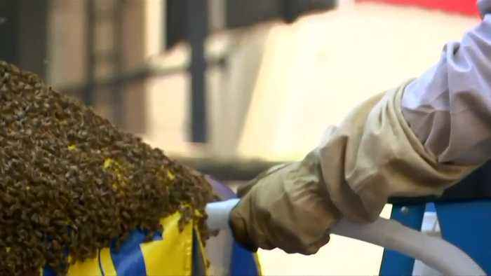 NYPD officer talks Times Square bees