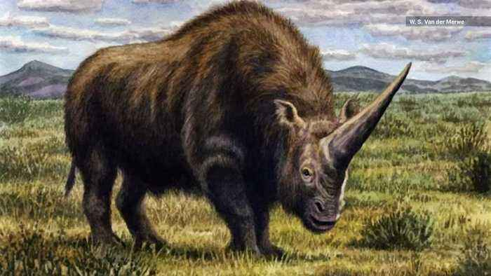 DNA Shows 'Siberian Unicorn' Roamed Earth with Humans
