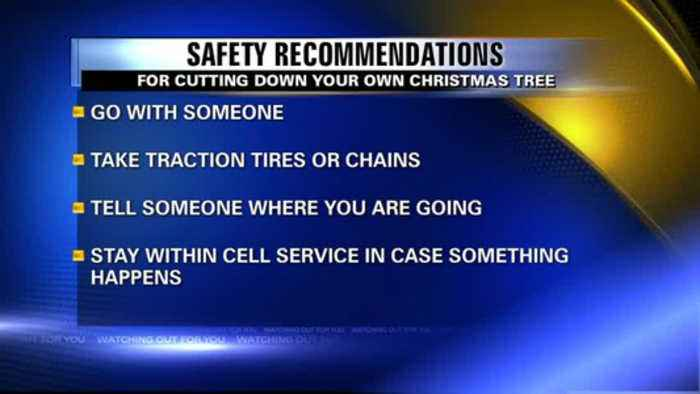 Cutting Down Your Own Christmas Tree: Safety Recommendations