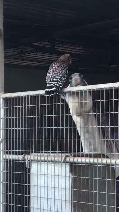 Horse and Bird are Buddies
