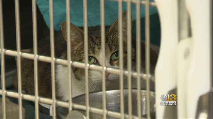 BARCS Using New Facial Recognition Technology For Lost Pets