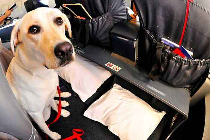 Delta Bans Puppies and Kittens on All of Its Flights