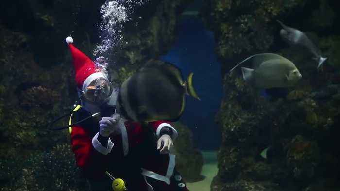 Good little sharks and fishies get surprise visit from Father Christmas in their tank