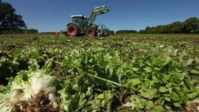 CDC Traces Romaine E. Coli Outbreak to California Farm