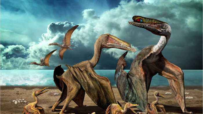 New Study Suggests Ptersoaurs Had Feathers Before Dinosaurs Or Birds