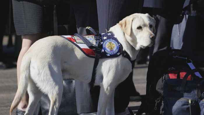 Sully the service dog will head to a new adventure after the holidays