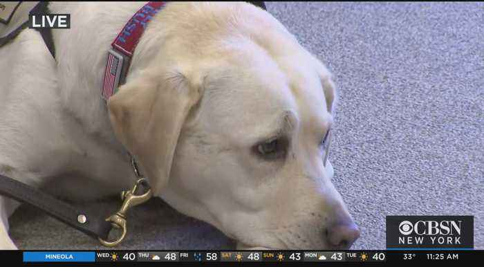Presidential Service Dog 'Sully' Returns To Long Island