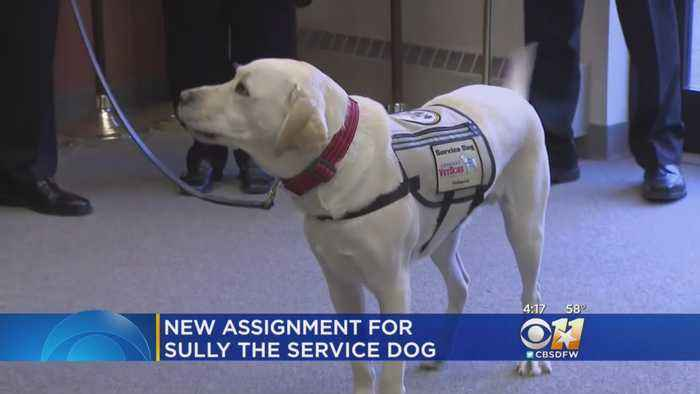 Presidential Service Dog Sully Returns To Long Island