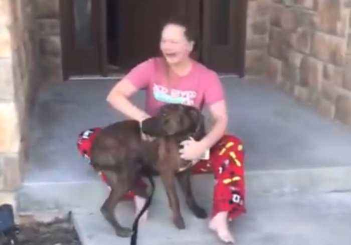 Christmas Comes Early as Parents Surprise Daughter With Shelter Dog She Was  Caring For