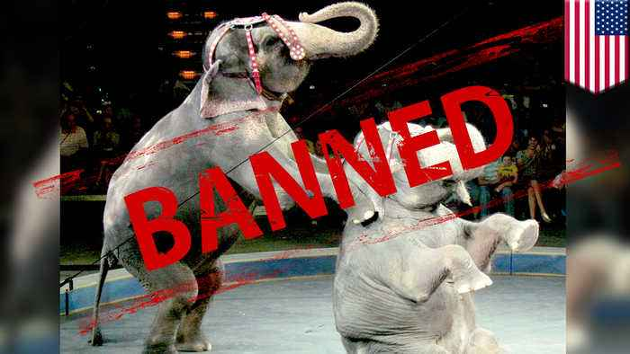 'Nosey's Law' bans animals from New Jersey circus acts