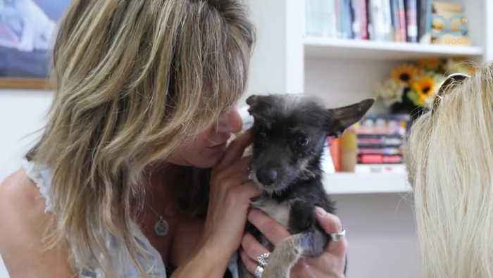Tracy's Rescue Mission to Save Dogs in South Texas Shelters (A Dog's Journey Home)