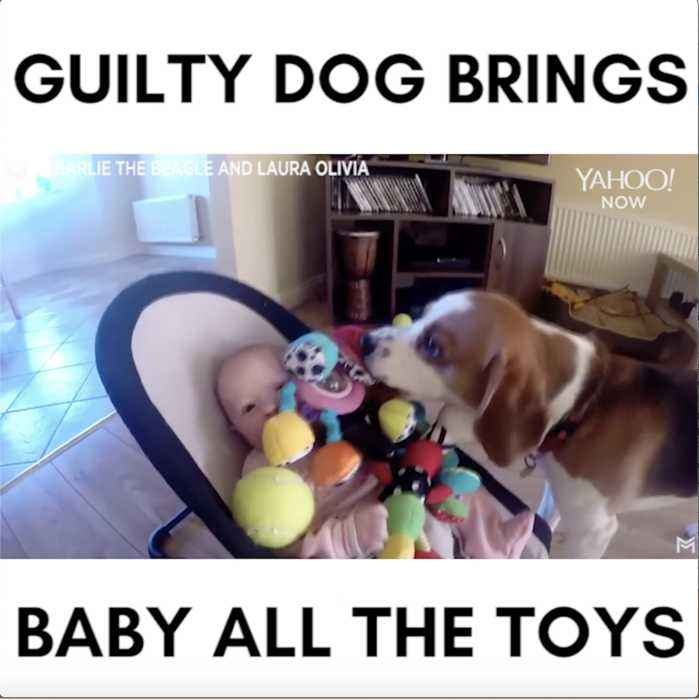Guilty puppy apologies to baby by showering her in toys