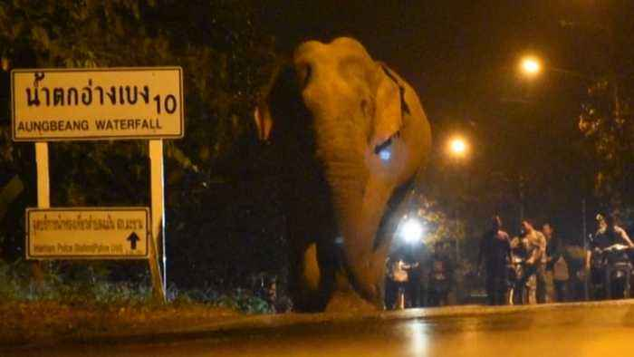 The Villager Sparks Panic After Elephant Walking Along Road