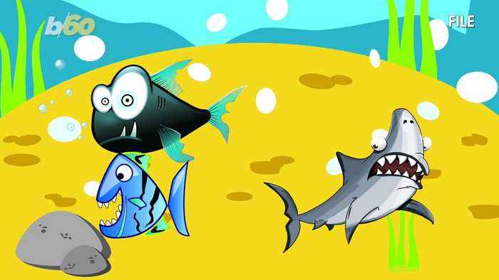 A 'Shark'-y Children's Song Hits the Billboard Hot 100