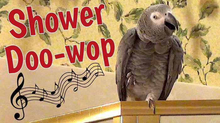 Parrot performs 'Doo-Wop' song in the shower