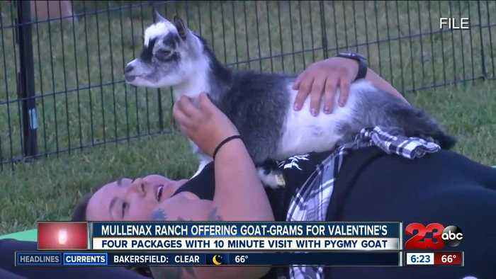 Mullenax Ranch offering Goat-Grams for Valentine's Day