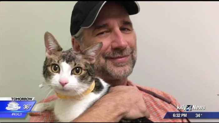 WSU veterinarians successfully treat cat with three brain tumors, use 3D printing to replace skull