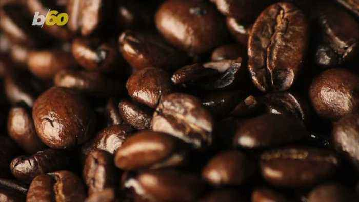 Alarming Percentage of the World's Wild Coffee Species at Risk of Extinction