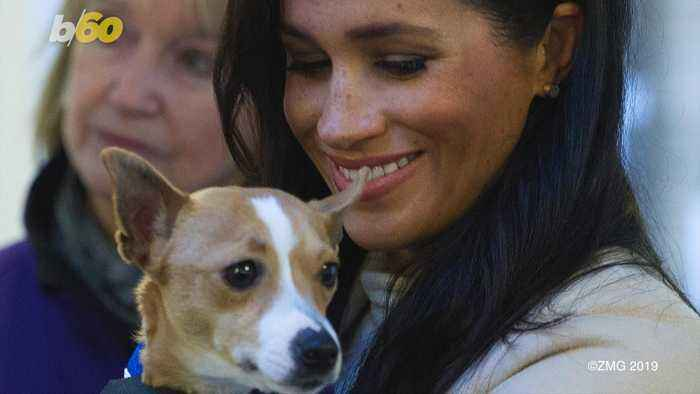 Phone Ringing Off the Hook for Shelter Dog Who Palled Around with Meghan Markle