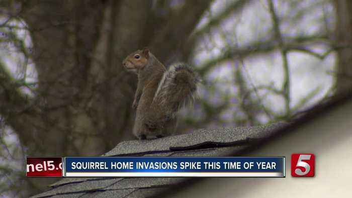 Squirrels, rats causing problems for homes as they look for ways to stay warm