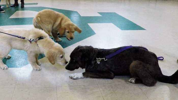 Rescued puppy makes adorable new friends at puppy school