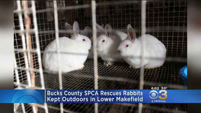Bucks County SPCA Rescues Rabbits In Lower Makefield