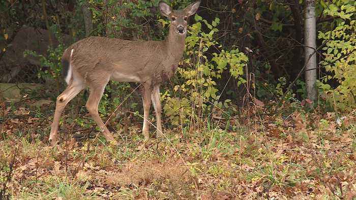 Shooter Charged with Manslaughter After Fatally Shooting Woman He Allegedly Thought Was Deer