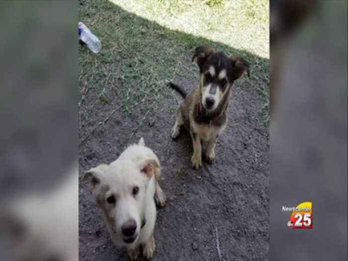 Bloomington family seeks justice for pet